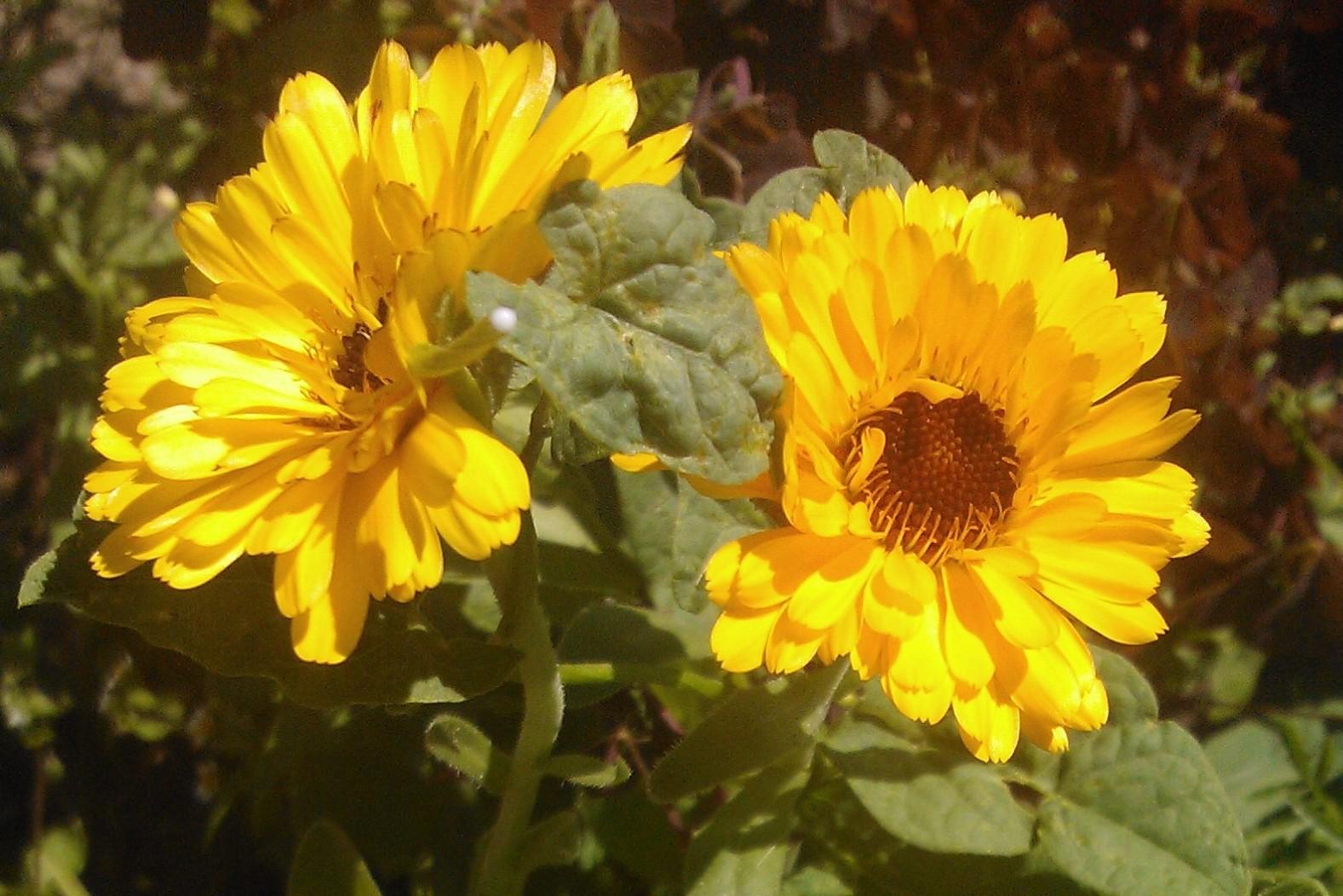 Комнатные растения: фото с названиями. Фотографии