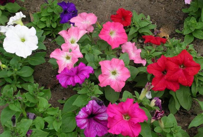 Цветы цветущие всё лето