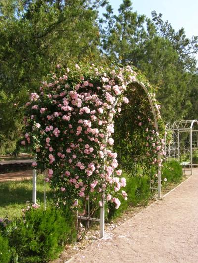 Арка для розы вьющиеся купить заказать композиции из горшечных цветов
