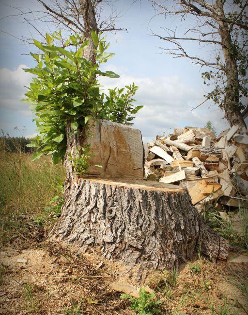 Шедевры для сада из дерева