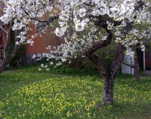 Flowers-in-the-Garden-520x410