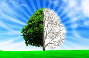 строение-дерева