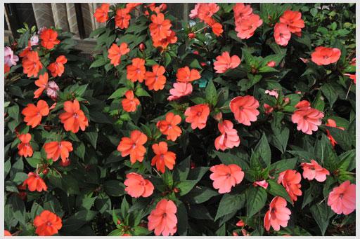 френч с яркими цветами фото и