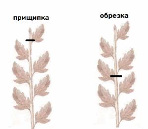 statta2-1