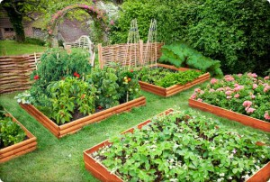 Raised_Bed_Garden_Kits