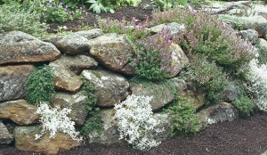 Herbs & retaining wall