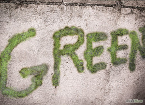 670px-Make-Moss-Graffiti-Step-8revised