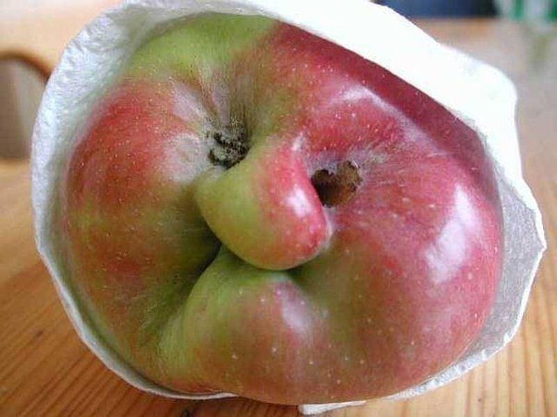 картинки овощи и фрукты прикольные