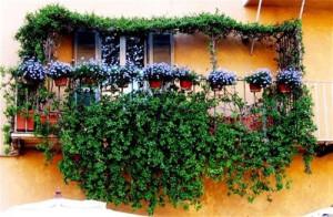 1334998175_kak-ozelenit-balkon-1