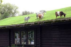 goatsgreenroof