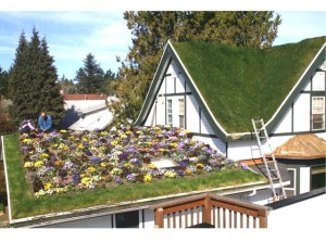 green-roof-10.php_1