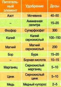 sadov_n_15_2