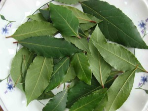 daphne leavesSMALL
