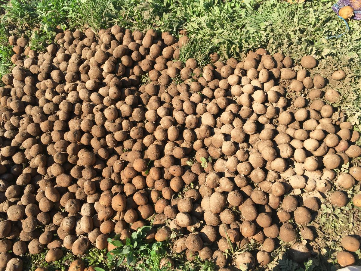 Сонник картошка, толкование снов. К чему снится 35