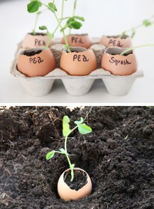 20-Insanely-Clever-Gardening-Tips-And-Ideas12