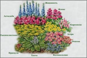 1382783551_cvety-na-klumbe-5